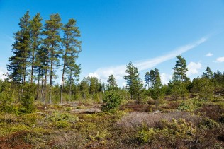 BillerudKorsnäs has entered into an agreement to acquire Bergvik Skog Öst
