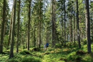 Metsä Board achieves again the highest sustainability rating from EcoVadis