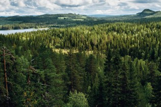 Metsä Board named on CDP 'A List' for leading effort against climate change for  the fourth consecutive year